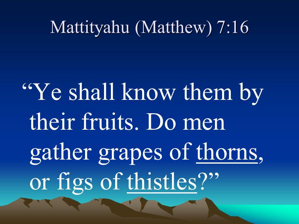 Mattityahu (Matthew) 7:16