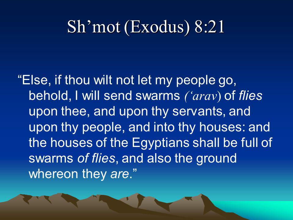 Sh'mot (Exodus) 8:21