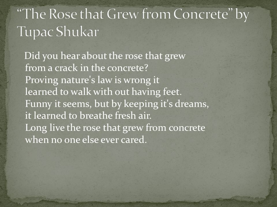 The Rose that Grew from Concrete by Tupac Shukar