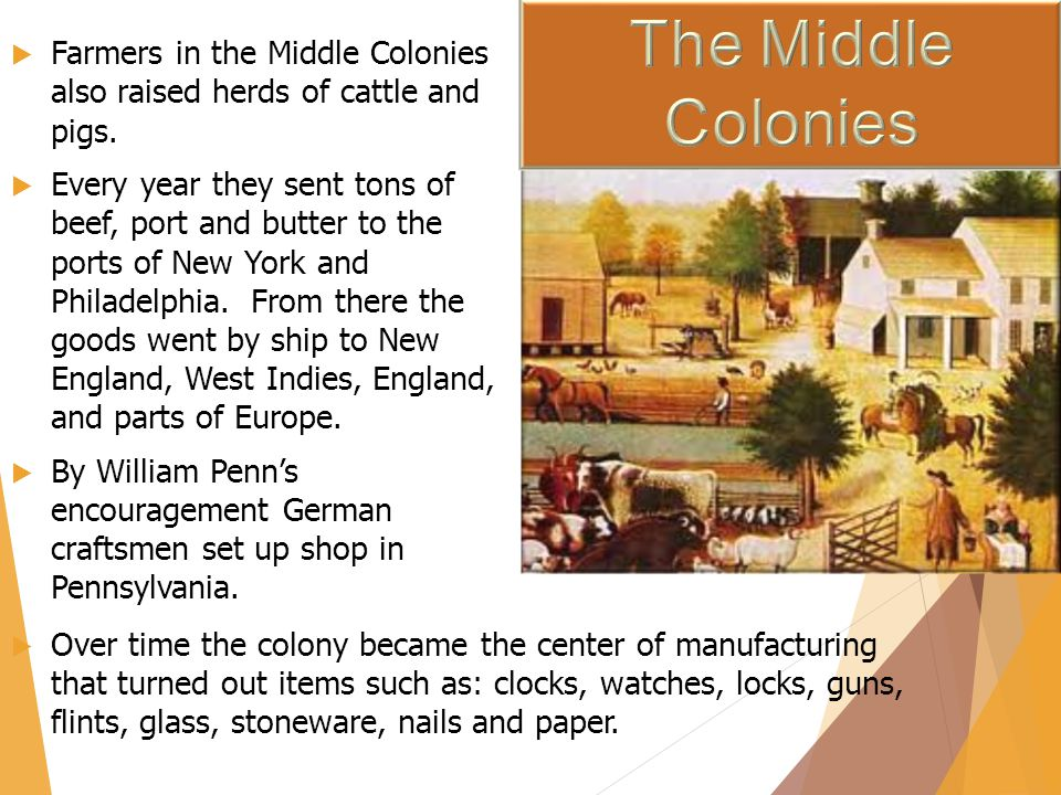 The Middle Colonies Farmers in the Middle Colonies also raised herds of cattle and pigs.