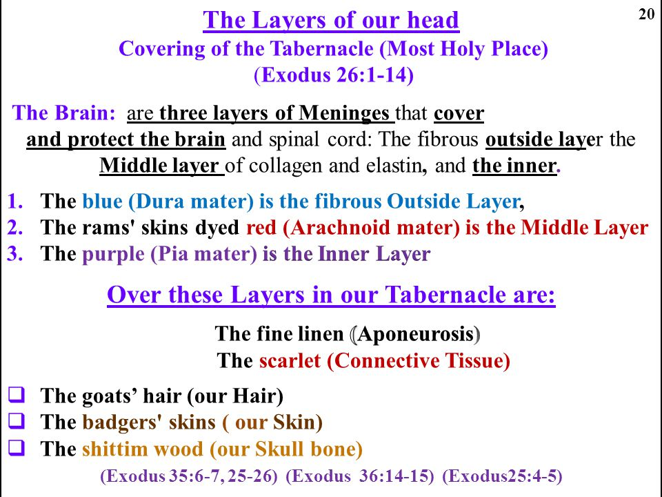 The Layers of our head Over these Layers in our Tabernacle are: