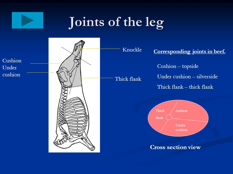 Joints of the leg Cross section view Knuckle