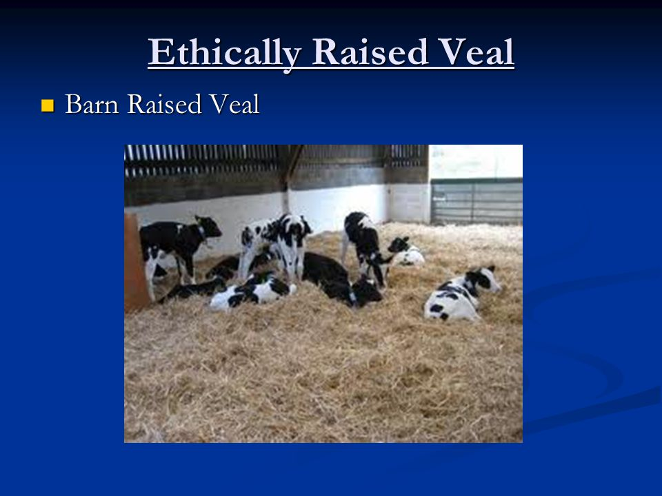 Ethically Raised Veal Barn Raised Veal