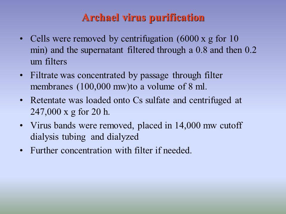 Archael virus purification