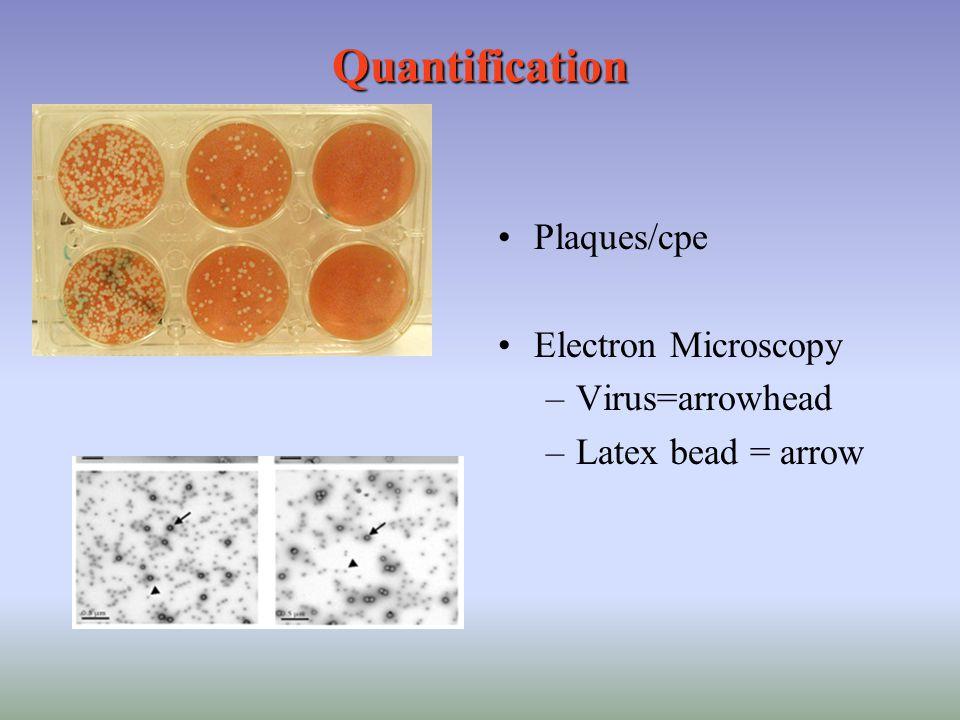 Quantification Plaques/cpe Electron Microscopy Virus=arrowhead