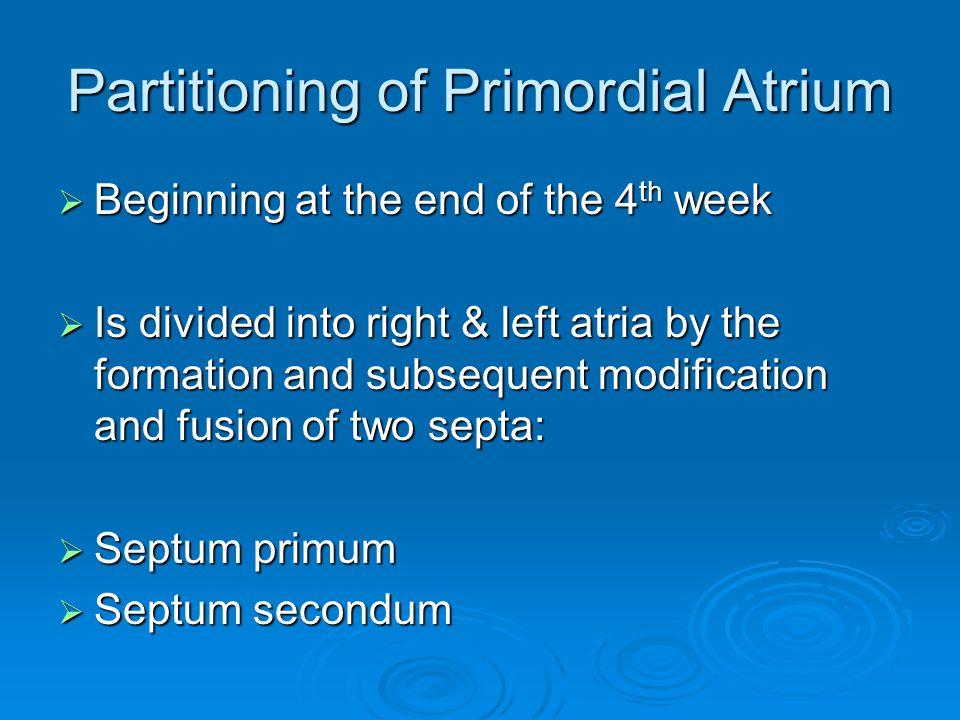 Partitioning of Primordial Atrium