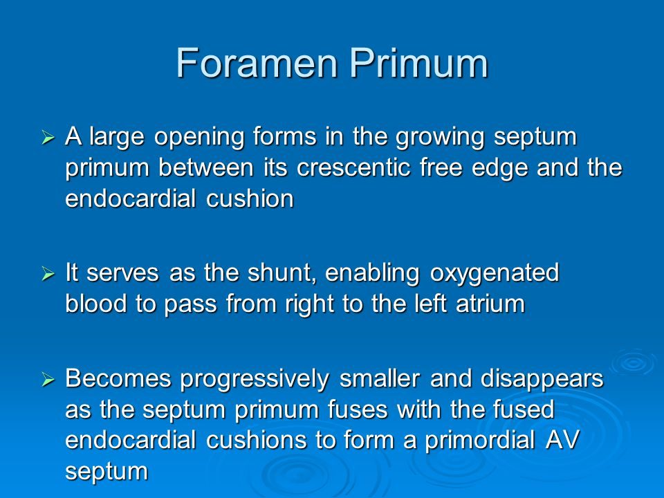 Foramen Primum A large opening forms in the growing septum primum between its crescentic free edge and the endocardial cushion.