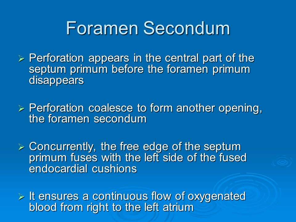 Foramen Secondum Perforation appears in the central part of the septum primum before the foramen primum disappears.