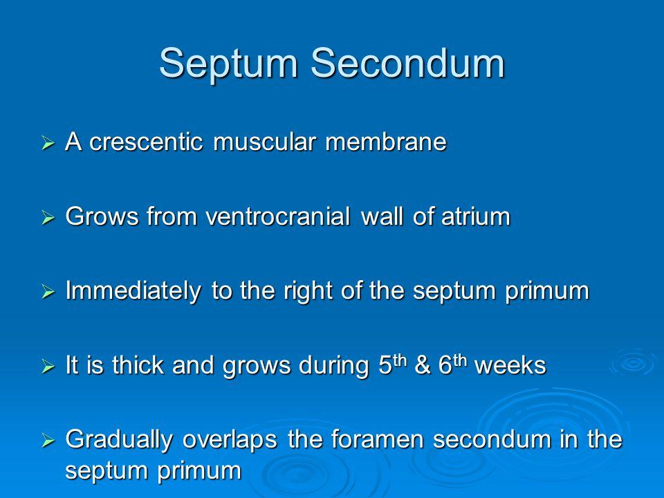 Septum Secondum A crescentic muscular membrane