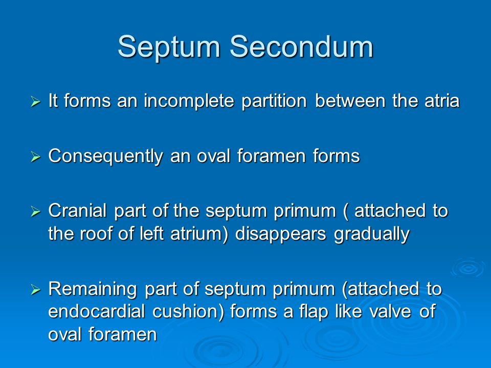 Septum Secondum It forms an incomplete partition between the atria