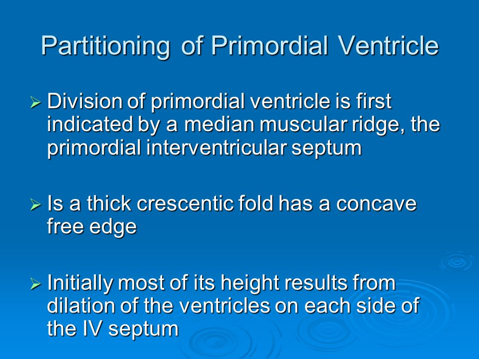Partitioning of Primordial Ventricle