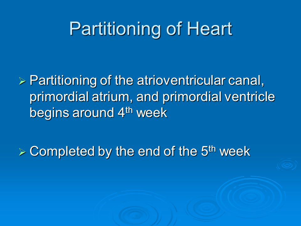 Partitioning of Heart Partitioning of the atrioventricular canal, primordial atrium, and primordial ventricle begins around 4th week.