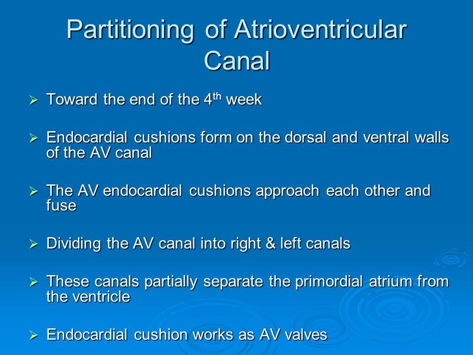 Partitioning of Atrioventricular Canal
