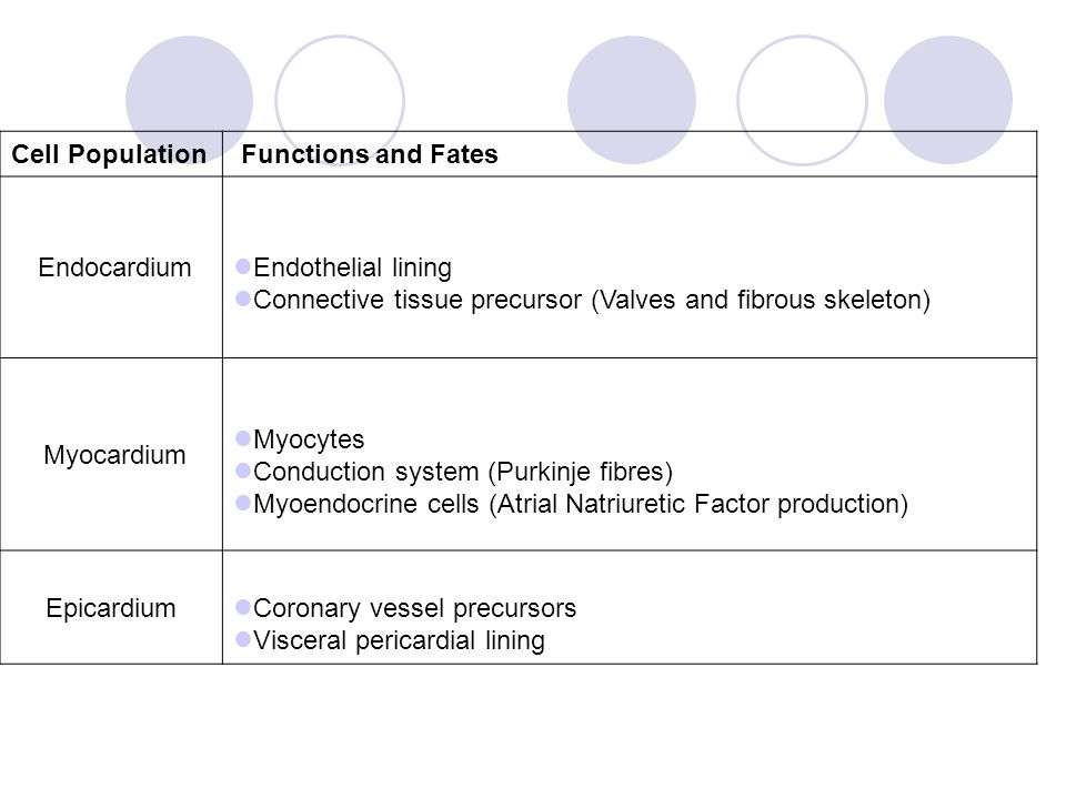 Cell Population Functions and Fates. Endocardium. Endothelial lining. Connective tissue precursor (Valves and fibrous skeleton)