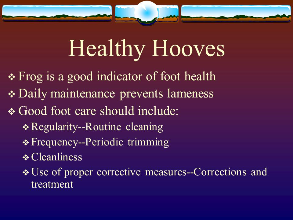 Healthy Hooves Frog is a good indicator of foot health