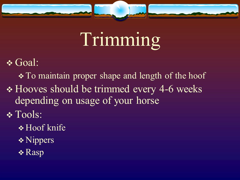 Trimming Goal: To maintain proper shape and length of the hoof. Hooves should be trimmed every 4-6 weeks depending on usage of your horse.