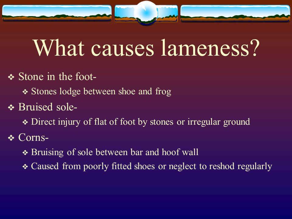 What causes lameness Stone in the foot- Bruised sole- Corns-