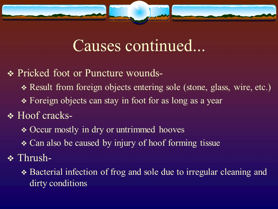 Causes continued... Pricked foot or Puncture wounds- Hoof cracks-