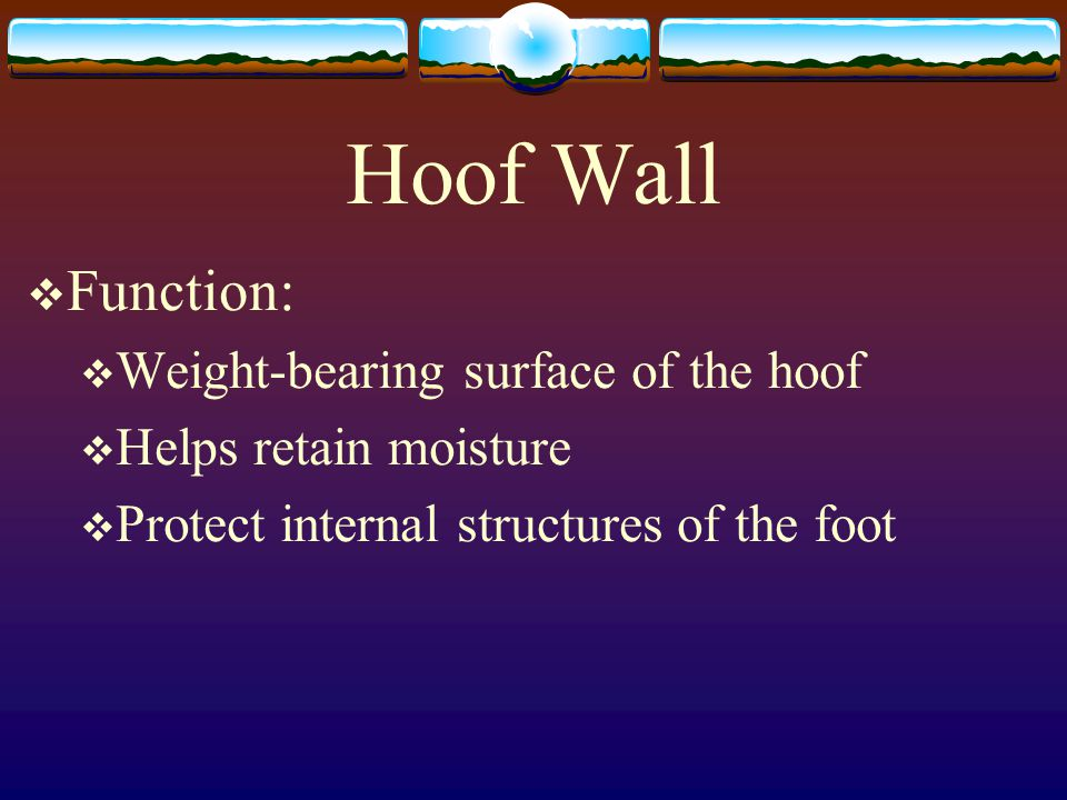Hoof Wall Function: Weight-bearing surface of the hoof