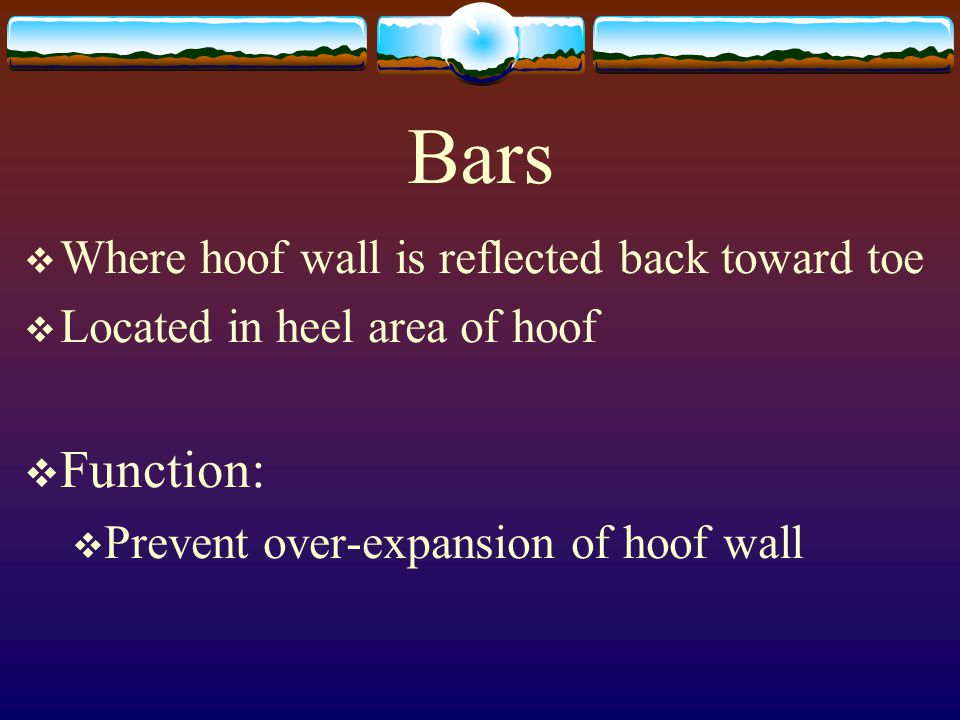 Bars Function: Where hoof wall is reflected back toward toe