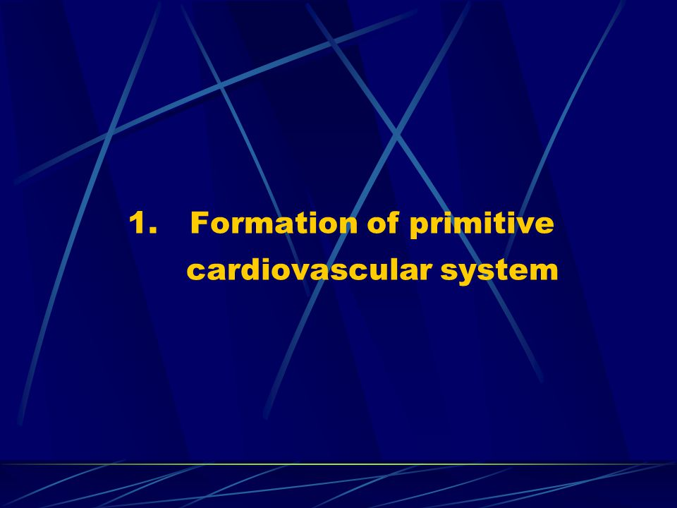 Formation of primitive cardiovascular system