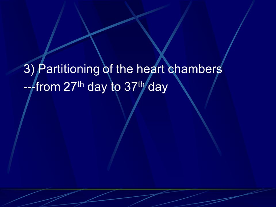 3) Partitioning of the heart chambers
