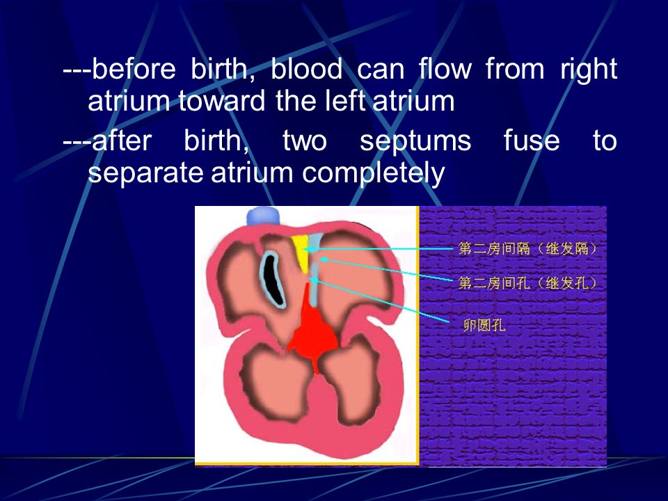 ---before birth, blood can flow from right atrium toward the left atrium