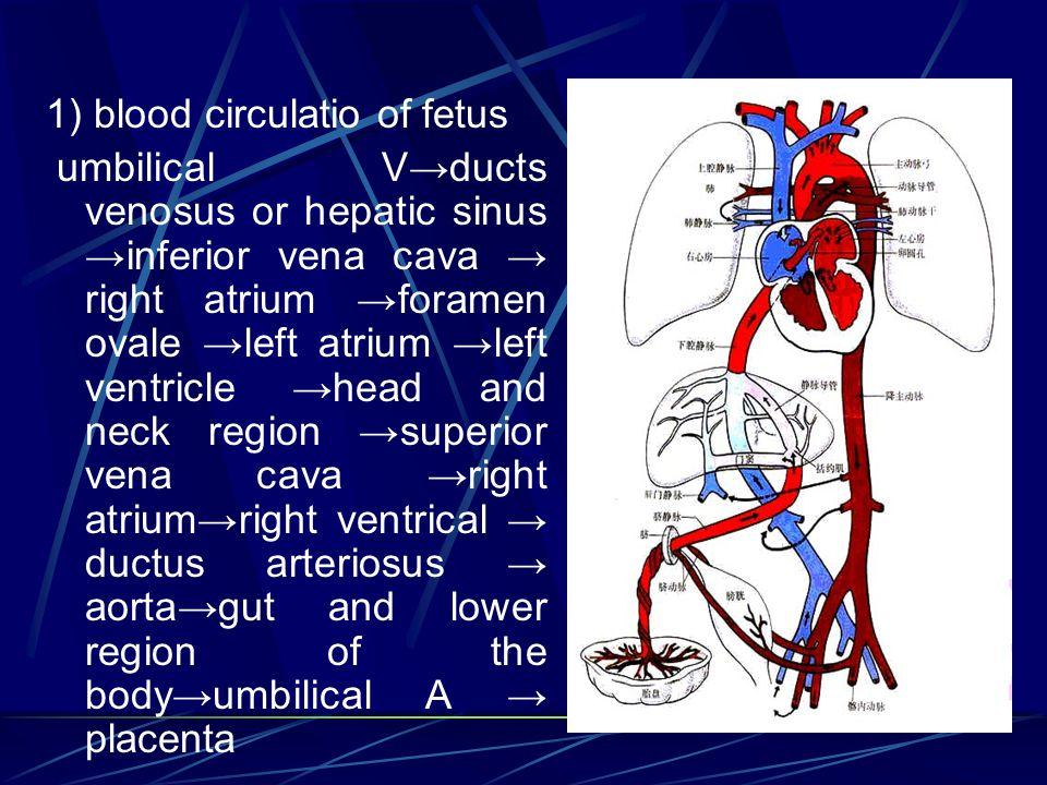 1) blood circulatio of fetus
