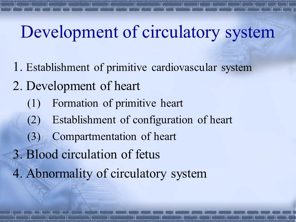 Development of circulatory system