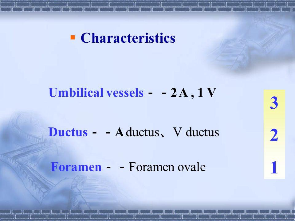3 2 1 Characteristics Umbilical vessels--2 A , 1 V