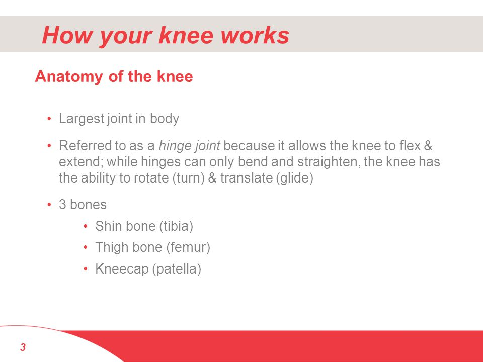 How your knee works Anatomy of the knee Largest joint in body
