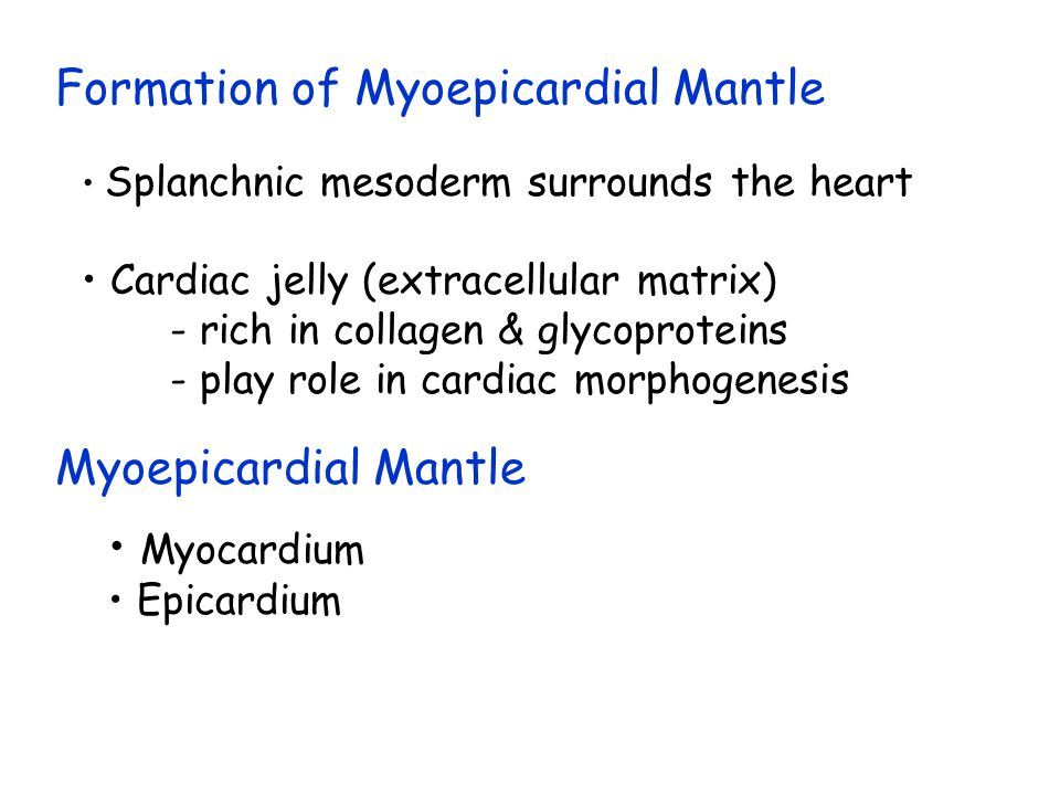 Formation of Myoepicardial Mantle