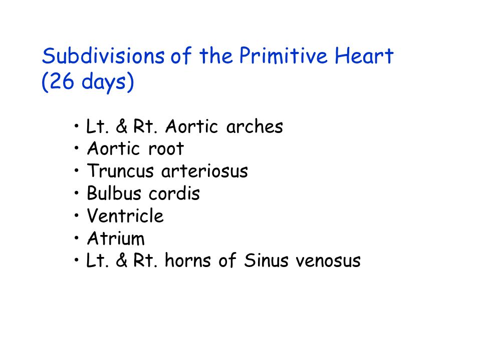 Subdivisions of the Primitive Heart (26 days)