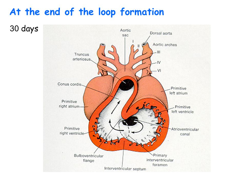 At the end of the loop formation