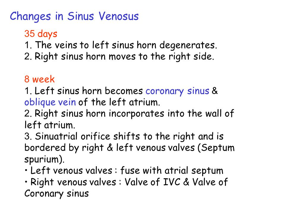 Changes in Sinus Venosus