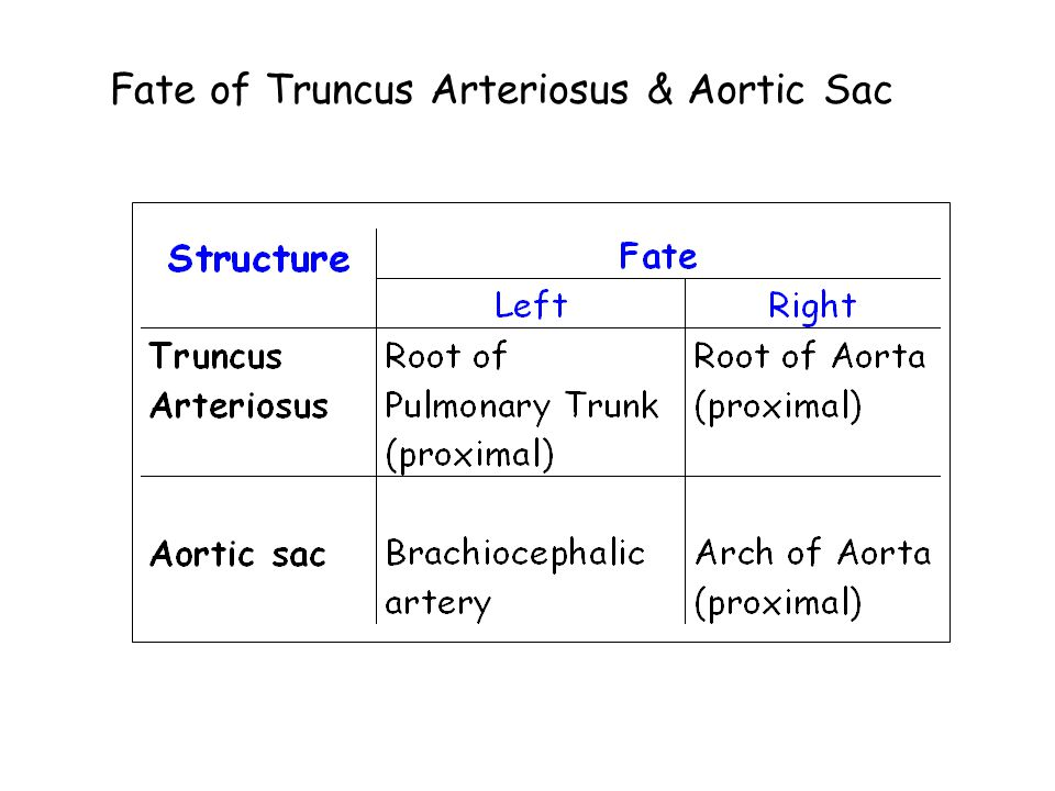 Fate of Truncus Arteriosus & Aortic Sac