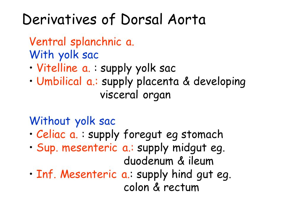 Derivatives of Dorsal Aorta