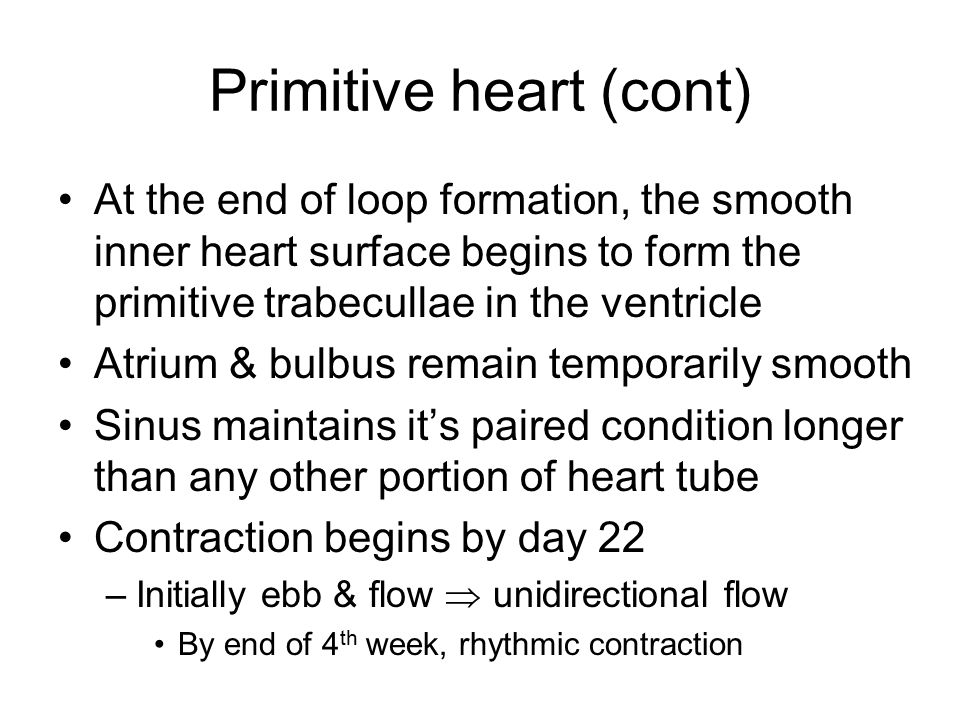 Primitive heart (cont)