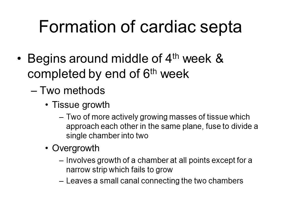 Formation of cardiac septa