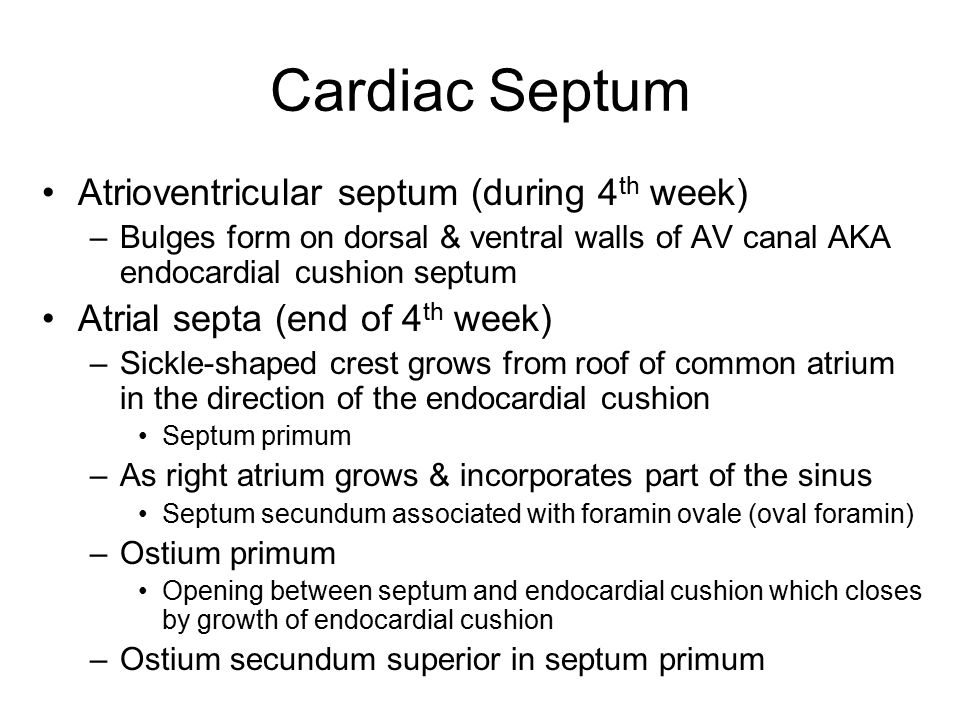Cardiac Septum Atrioventricular septum (during 4th week)