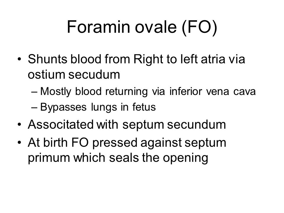 Foramin ovale (FO) Shunts blood from Right to left atria via ostium secudum. Mostly blood returning via inferior vena cava.