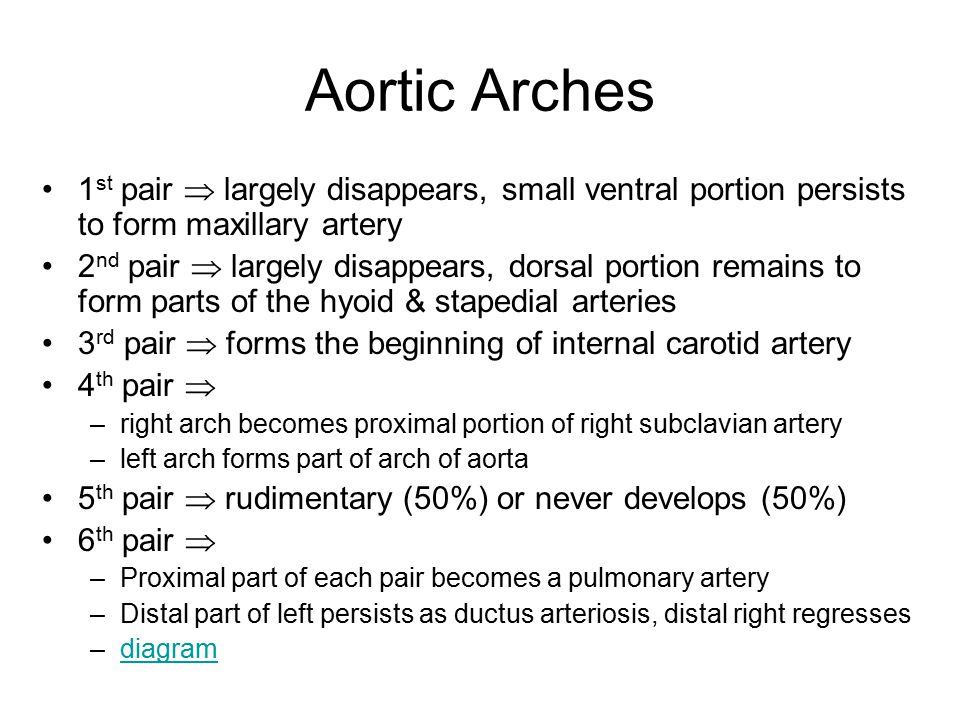 Aortic Arches 1st pair  largely disappears, small ventral portion persists to form maxillary artery.
