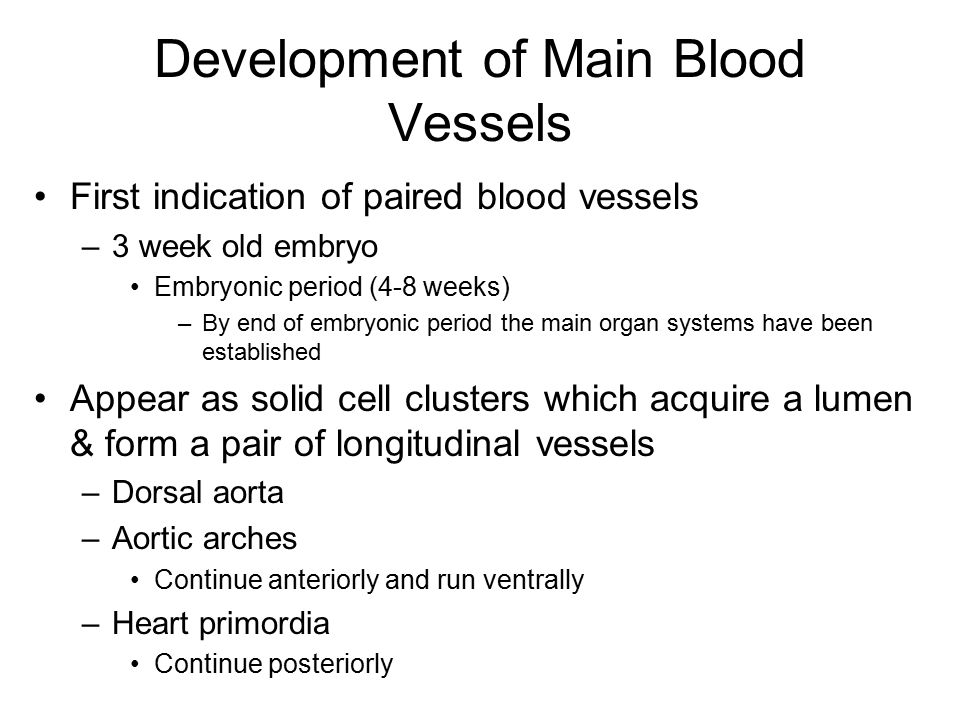 Development of Main Blood Vessels