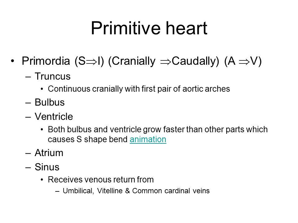 Primitive heart Primordia (SI) (Cranially Caudally) (A V) Truncus