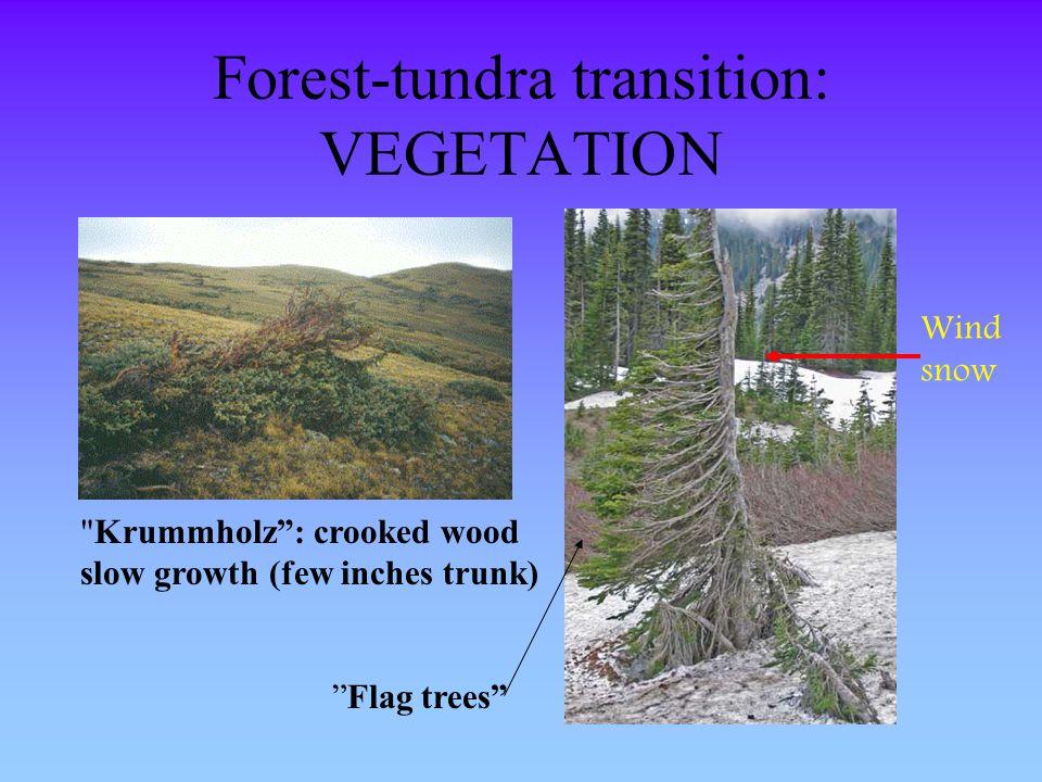 Forest-tundra transition: VEGETATION