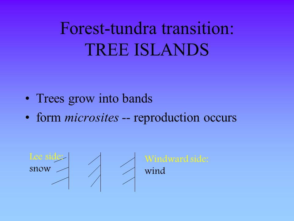 Forest-tundra transition: TREE ISLANDS