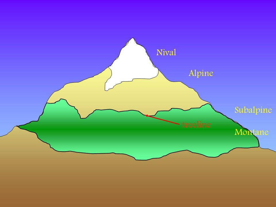 Nival Alpine Subalpine Montane treeline