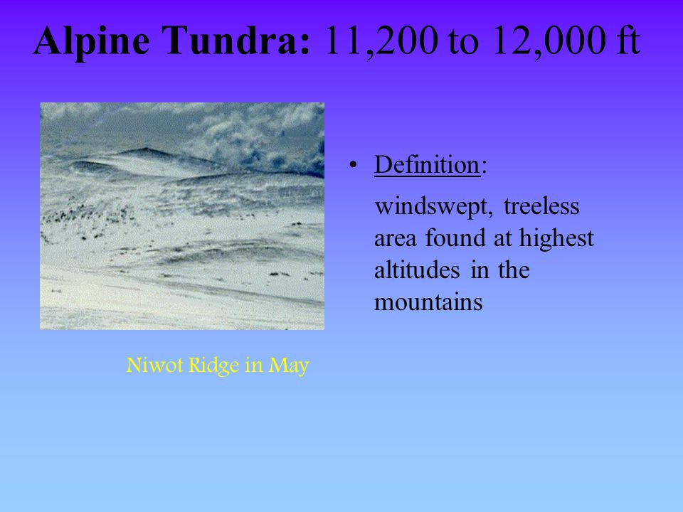 Alpine Tundra: 11,200 to 12,000 ft Definition: