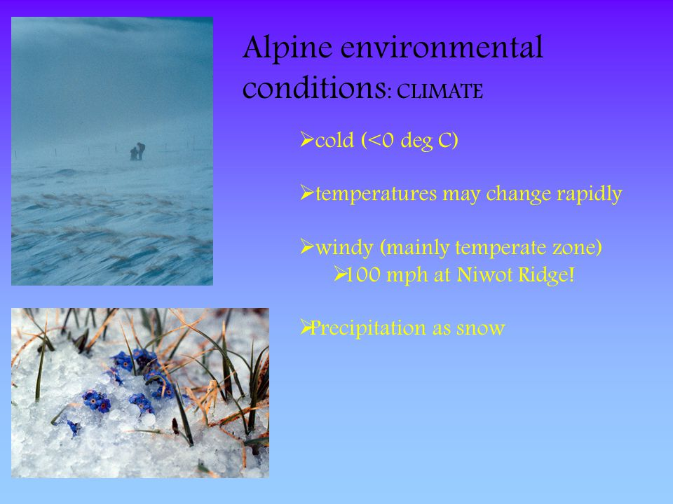 Alpine environmental conditions: CLIMATE