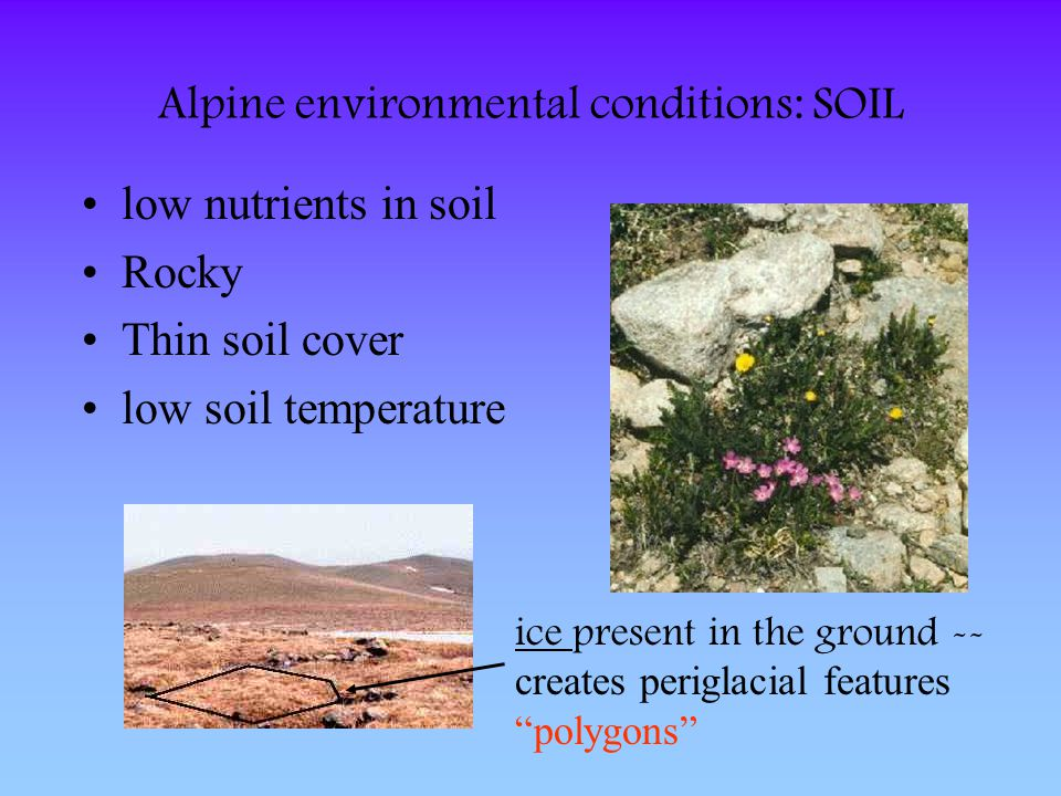 Alpine environmental conditions: SOIL